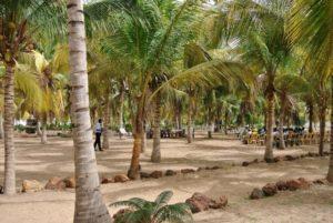 Accueil de congressistes dans la cocoteraie de Kaydara au Sénégal
